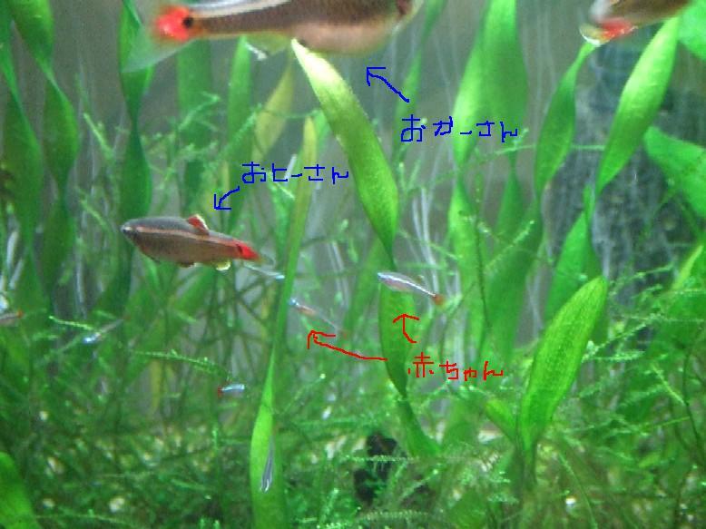 2008_01132007